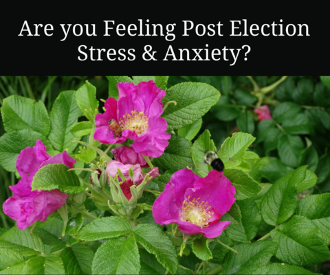 Post Election Anxiety and Fear