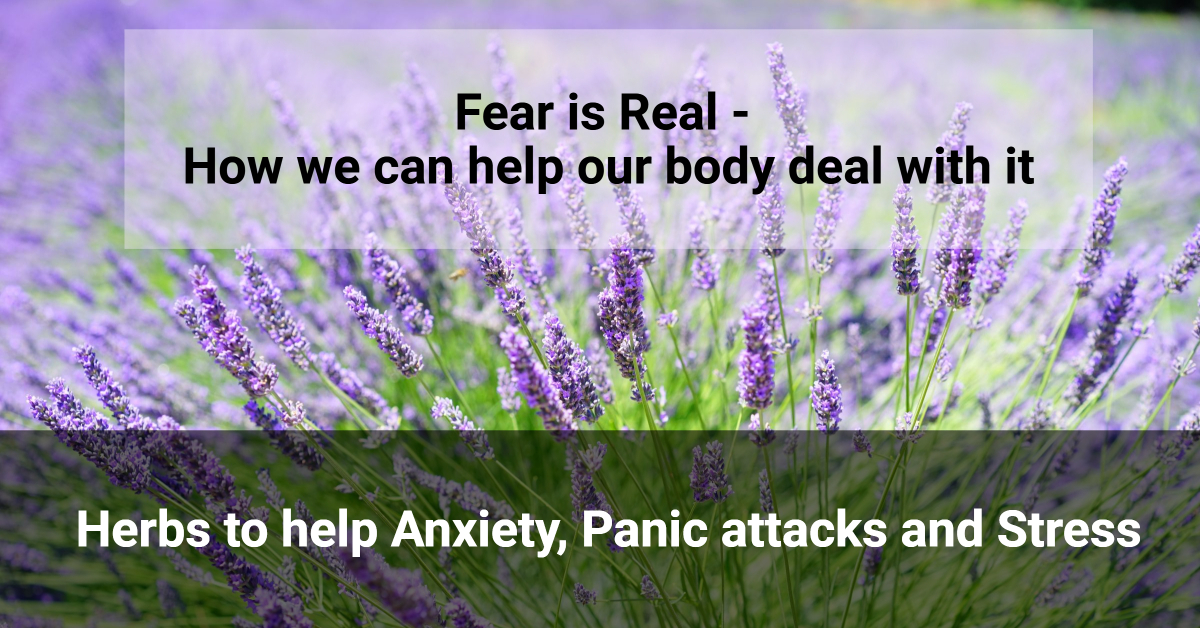 Fear is Real - how we can help our body deal with it